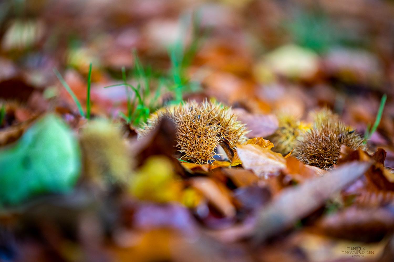 Svampe Fototur til Årup Skov
