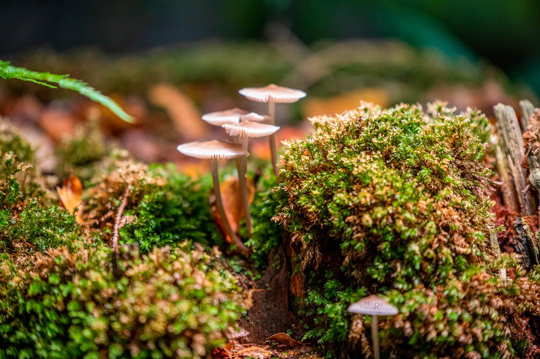 Fototur Årup skov