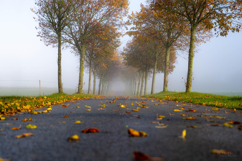 Efterårs_Allé i tåge - Natur - Yfoto.dk