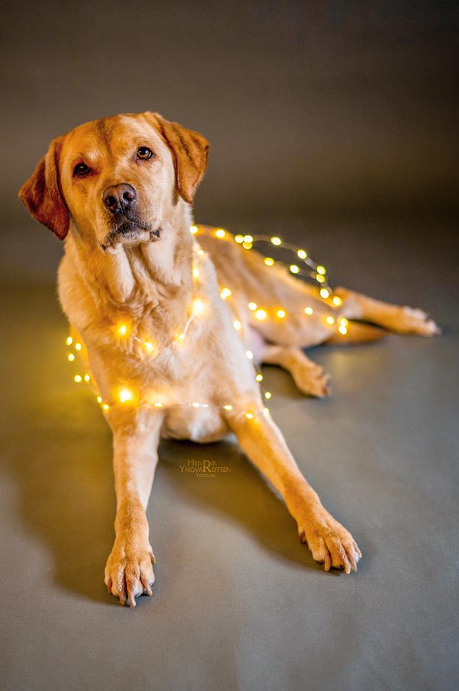 Julehunden Laika med lys