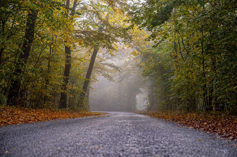 Skovvej i tåge - Natur - Yfoto.dk